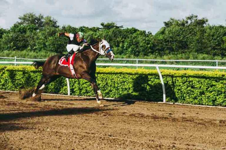 equestrian-equine-farm-1462398